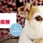 動物病院は高額でしょ?家族同然の愛犬や愛猫の為の「ドコモのペット保険」が始まる!